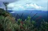 venezuela tepuy nature