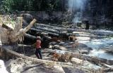 Po vykácení pralesa nastoupí vodní stříkačky